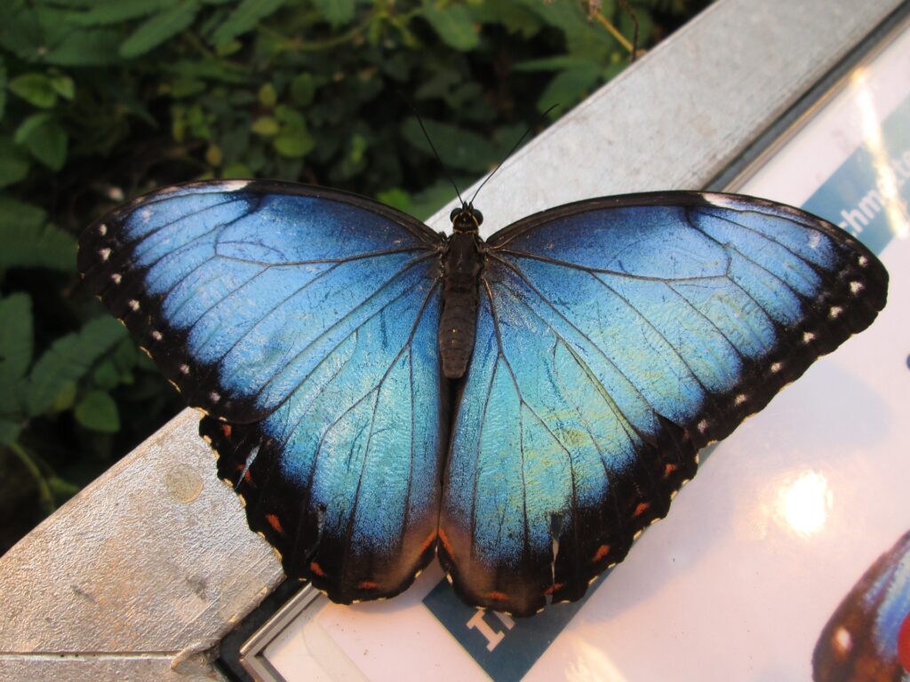 sky-butterfly-947720_1920